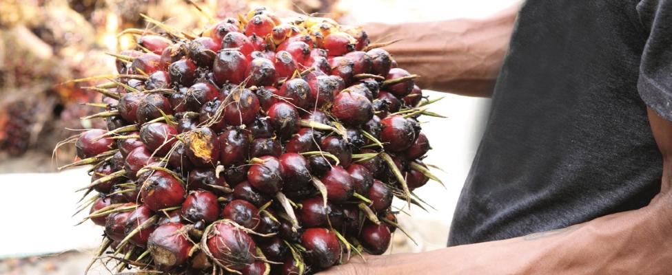 RSPO palmiõli tarneahela sertifikaat